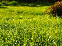 Grama verde luxúria Fotografia de Stock Royalty Free