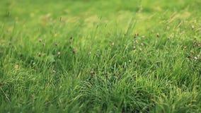 A grama verde moveu-se pelo vento do verão no prado luxúria vídeos de arquivo