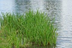 Grama verde na costa do reservatório perto da água Fotografia de Stock