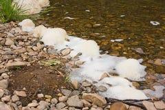 Grama verde no banco do rio Imagens de Stock