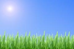 Grama verde no céu azul imagens de stock royalty free
