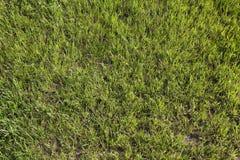 Grama verde no campo de futebol Fotos de Stock Royalty Free