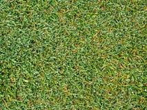 Grama verde no fim acima da textura para o fundo Imagens de Stock Royalty Free