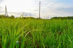 Grama verde no fim do campo acima foto de stock royalty free