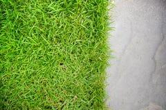 Grama verde no fundo da pedra da areia Fotografia de Stock