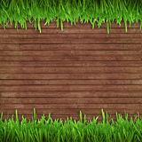 Grama verde no fundo de madeira Imagem de Stock