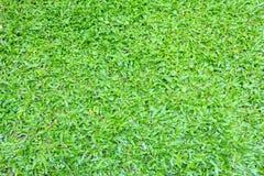 Grama verde no jardim Fotos de Stock Royalty Free