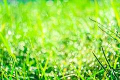 grama verde no jardim e no borrão da gota da água nas folhas na manhã fotos de stock royalty free
