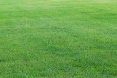 Grama verde no jardim (foco macio) Fotografia de Stock