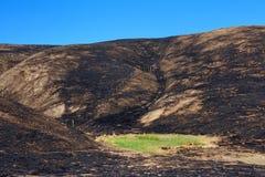 A grama verde no meio do fogo carbonizou o céu azul do vale fotos de stock