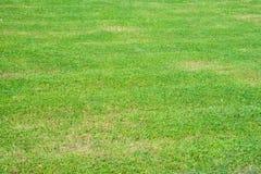 Grama verde no parque fotografia de stock