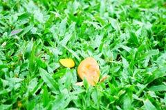 Grama verde no parque fotos de stock royalty free