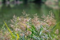 Grama verde no parque do verão ou da mola Fundos naturais Imagem de Stock
