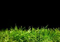Grama verde no preto imagem de stock royalty free