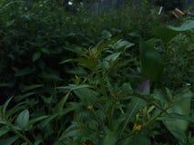 Grama verde no quintal fotos de stock