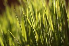 Grama verde no sol imagem de stock