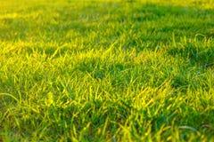 Grama verde no sol, fundo imagens de stock