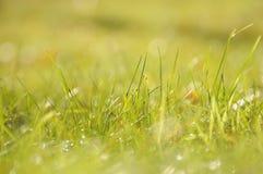 A grama verde no sol irradia-se, profundidade de campo pequena Fotografia de Stock