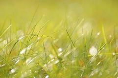 A grama verde no sol irradia-se, profundidade de campo pequena Imagens de Stock