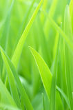 Grama verde nova foto de stock