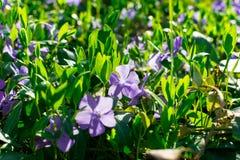 Grama verde nova Dia de Sun Despertar da natureza fotografia de stock