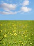 Grama verde, o céu azul Imagem de Stock