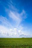 Grama verde, o céu azul e nuvens brancas Imagem de Stock