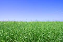 Grama verde, o céu azul e nuvens brancas Fotografia de Stock Royalty Free