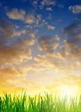 Grama verde orvalhado fresca no nascer do sol Foto de Stock