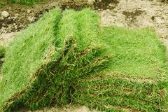 Grama verde para pavimentar foto de stock