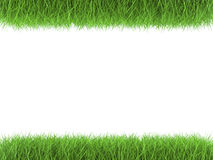 Grama verde paralela no fundo branco Fotografia de Stock
