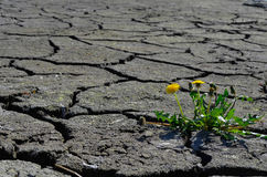 Grama verde que cresce acima na terra seca da quebra Fotos de Stock
