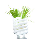 Grama verde que cresce da lâmpada isolada no branco fotos de stock royalty free