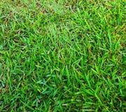 Grama verde que cresce em um gramado em um parque da cidade, coberto com o orvalho da manhã Fotos de Stock Royalty Free