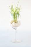 Grama verde que cresce em um vidro de vinho Imagem de Stock