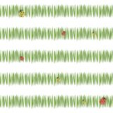 A grama verde simples verde listra a vegetação do chá do frescor do cartão com os joaninhas vermelhos e o amarelo isolados no sea ilustração royalty free