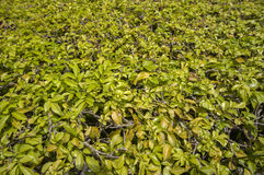 Grama verde sintética imagem de stock royalty free