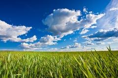 Grama verde sob céus azuis Fotos de Stock