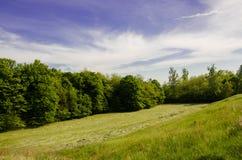 Grama verde sob o céu azul Foto de Stock