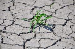Grama verde Sprouted Imagens de Stock