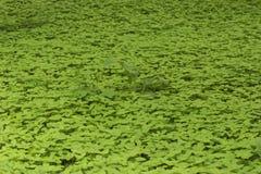 Grama verde suculenta Fotos de Stock Royalty Free