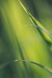 Grama verde verde, no assoalho o mais forrest, brilhando no sol do verão Foto de Stock