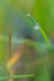Grama verde verde, no assoalho o mais forrest, brilhando no sol do verão Foto de Stock Royalty Free