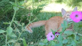 Grama vermelha exterior, sol do verão do gato video estoque