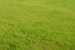 gramado Imagem de Stock