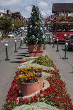 Gramado Christmas Tree South of Brazil Stock Image