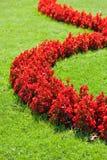 Gramado com flores fotos de stock royalty free