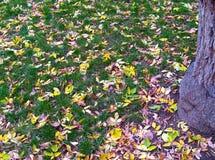 Gramado com folhas 1 Fotos de Stock