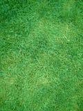 Gramado da erva do verde do corte Fotografia de Stock Royalty Free