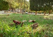 Gramado da grama no parque, alinhado com frutos secos e folhas imagens de stock